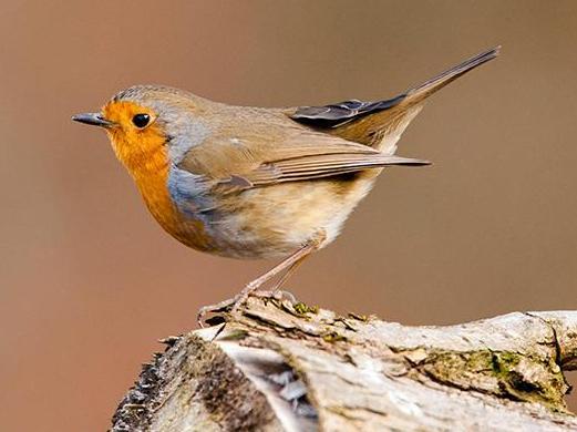 Découverte matinale des chants d'oiseaux