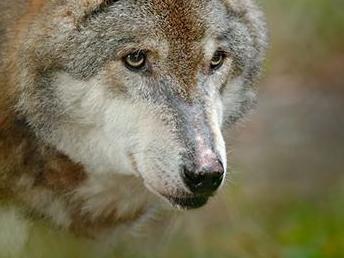 L'UNIL ménage la chèvre et le loup