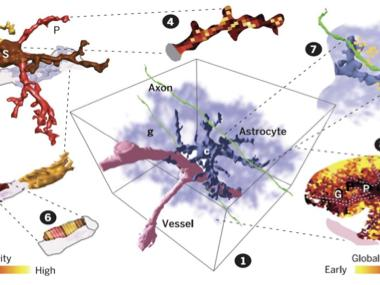 Decoding the language of astrocytes via 1D-to-3D Ca2+ imaging
