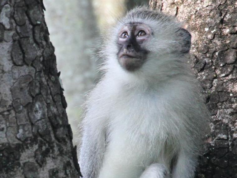 Apprentissage chez les primates: pourquoi les mâles sont flexibles et les femelles conservatrices