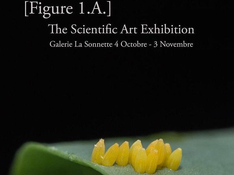 [Figure 1.A.] The Scientific Art Exhibition: 2e édition