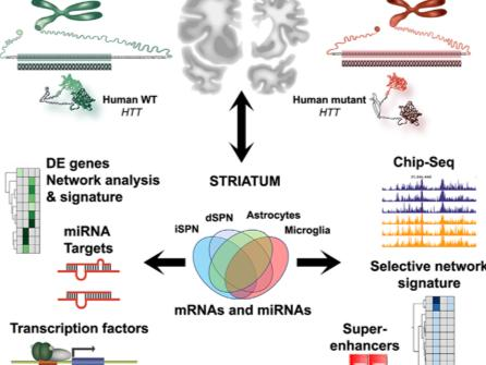 """""""Cell-Type-Specific Gene Expression Profiling in Adult Mouse Brain Reveals Normal and Disease-State Signatures"""""""