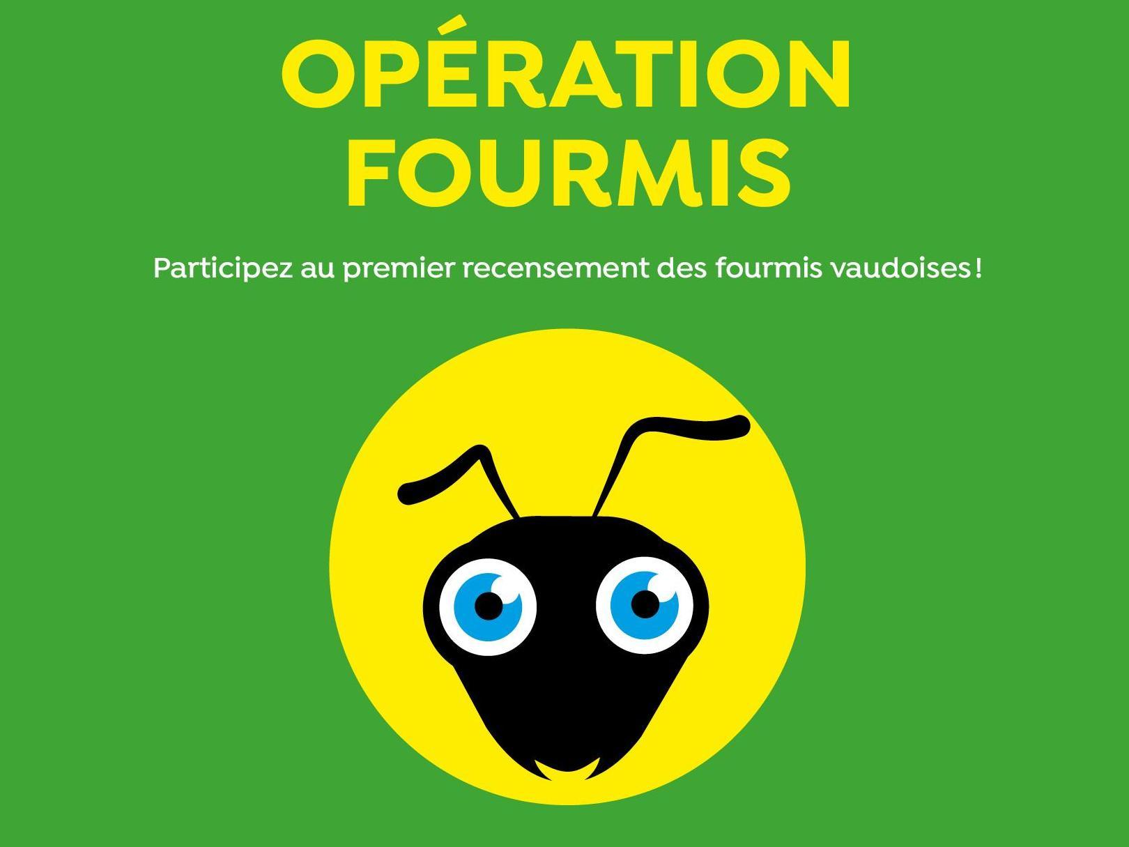 À vos kits pour l'Opération fourmis!