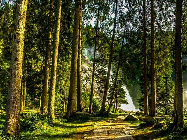 Planter des arbres pour sauver la planète? Pas si simple