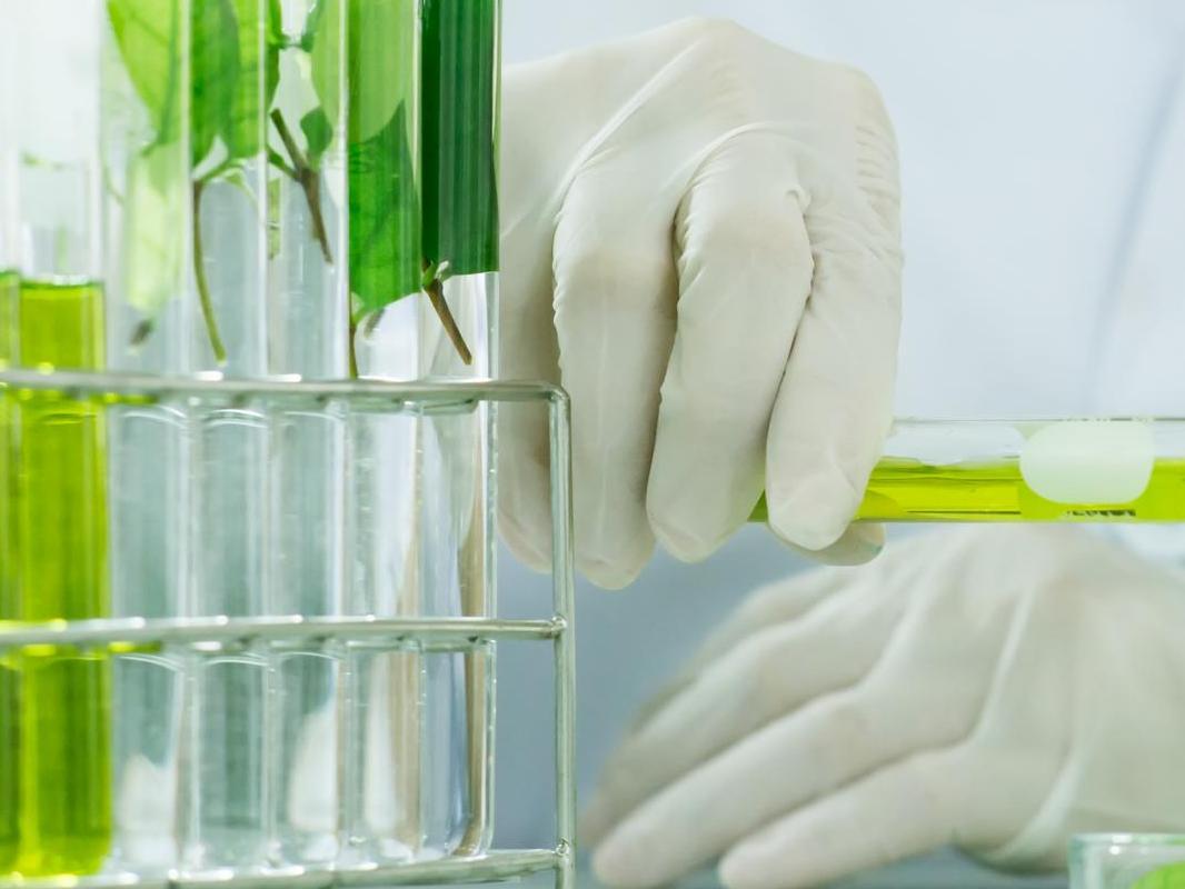Bourses PhD en sciences de la vie : un concours ouvert aux futur·e·s doctorant·e·s