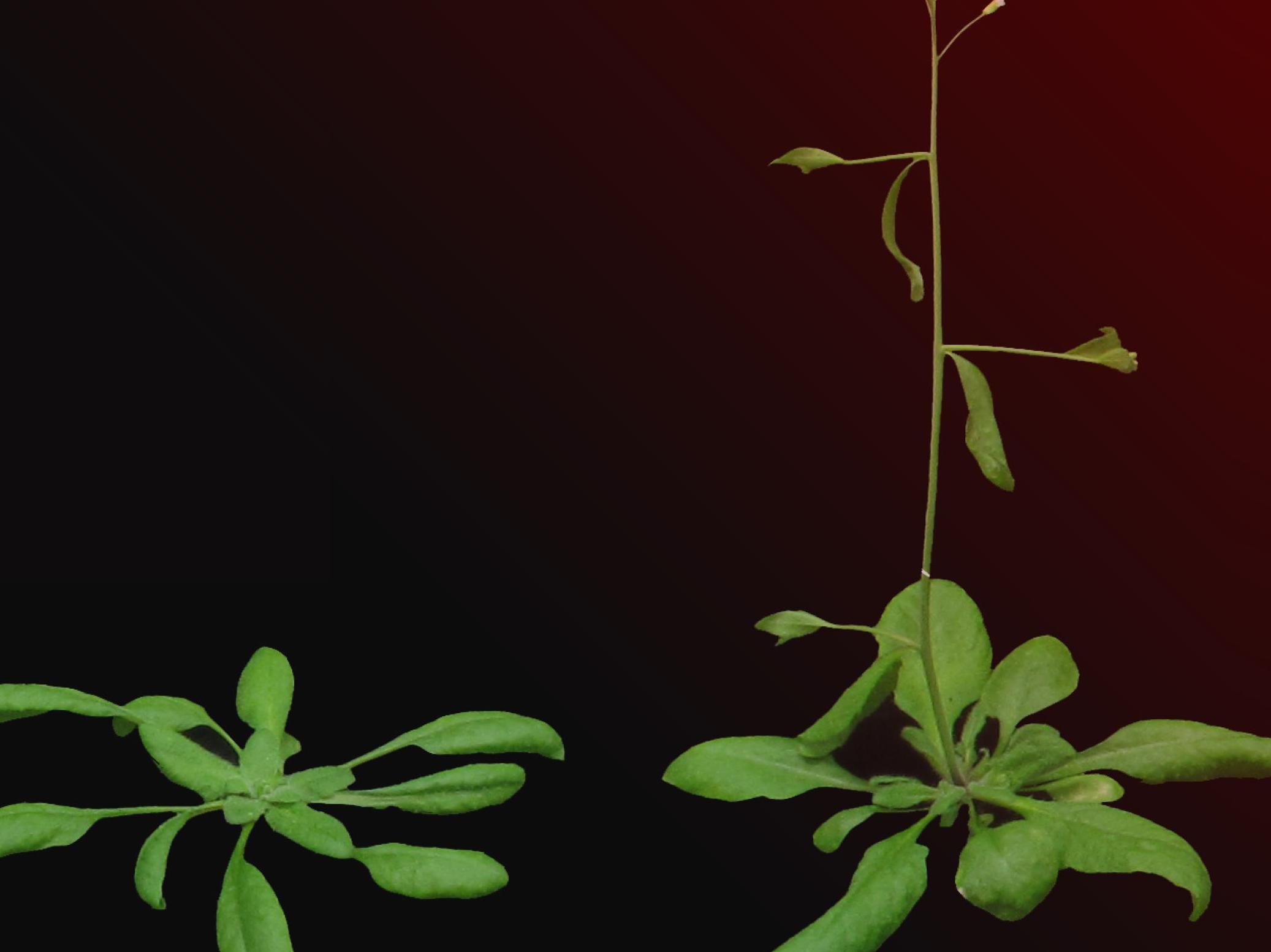 Une forte densité végétale accélère la reproduction des plantes